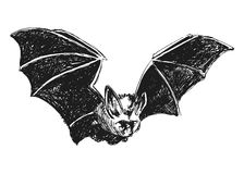 Hand sketch bat Stock Image