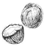 Hand sketch Coconuts Royalty Free Stock Photos