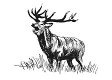 Hand sketch deer Royalty Free Stock Image