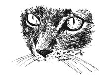 Hand sketch of detail cat. Vector illustration Stock Images