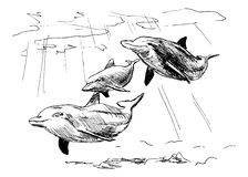 Hand sketch of dolphins Royalty Free Stock Image