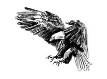 Hand Sketch Eagle Head Royalty Free Stock Photography
