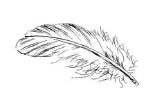 Hand sketch feather Stock Photo