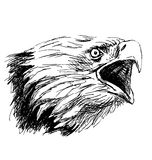 Hand sketch head bald eagles Royalty Free Stock Images