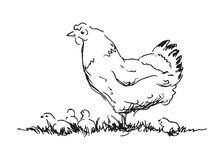 Hand sketch hen with chicks Stock Photography