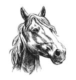 Hand sketch horse head Stock Photography