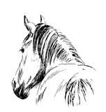 Hand sketch horses behind Royalty Free Stock Photos