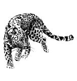 Hand sketch leopard Stock Photo
