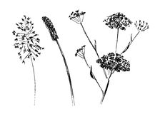 Hand sketch meadow plants Royalty Free Stock Photo