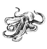 Hand sketch octopus Royalty Free Stock Image