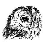 Hand sketch owl head Royalty Free Stock Images