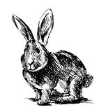 Hand sketch rabbit Royalty Free Stock Photography