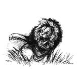 Hand sketch of a raging lion Stock Photography
