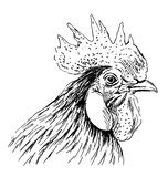 Hand sketch rooster head Royalty Free Stock Photography