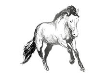 Hand sketch of a running horse Stock Images