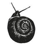 Hand sketch snail Royalty Free Stock Photo