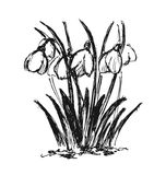 Hand sketch snowdrop Stock Images
