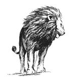 Hand sketch standing lion Stock Images