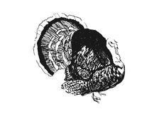 Hand sketch turkey Royalty Free Stock Photos