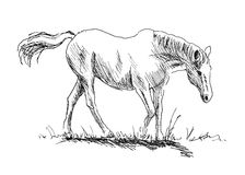 Hand sketch of a white horse Stock Photography