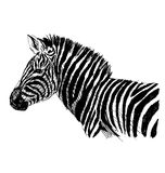 Hand sketch zebra side Royalty Free Stock Photos