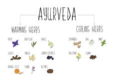 Hand-sketched collection of elements of Ayurvedic spices in our kitchen. Warming and cooling Herbs and supplements Ayurveda. Stock Photo