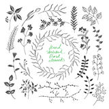 Hand sketched floral elements Royalty Free Stock Photo