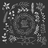 Hand sketched floral elements Stock Image