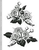 Hand sketched set of white roses in vintage engraving style Stock Photo