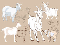 Hand sketches of goat Stock Images