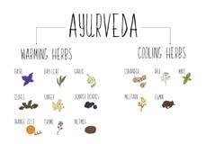 Hand-skissad samling av beståndsdelar av Ayurvedic kryddor i vårt kök Värme och kyla örter och tillägg Ayurveda Arkivfoto