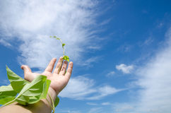 Hand on sky. Hand with vine reach out to sky Royalty Free Stock Photo
