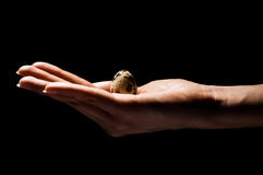 Hand with small egg in hand Royalty Free Stock Images