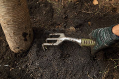 Hand with small gardening fork working in the garden Royalty Free Stock Photo