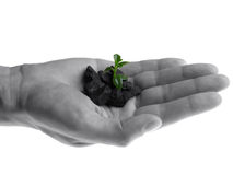 Hand with small plant Royalty Free Stock Photos