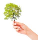Hand and small tree Stock Photos
