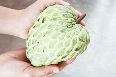 Hand soft caring fresh custard apple Stock Images