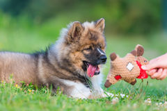 Hand with a soft toy plays with an elo puppy Royalty Free Stock Photos