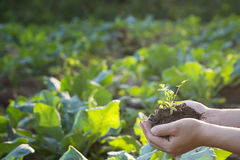 Hand on Soil cultivated dirt and tree. stock photography