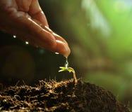 Hand som bevattnar till den lilla växten Fotografering för Bildbyråer