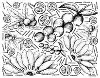 Hand som dras av nya frukter på vit bakgrund stock illustrationer