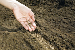 Hand som förlägger frö på jord Royaltyfri Bild