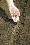 Hand som förlägger frö på jord Arkivfoto