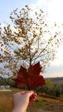 Hand som framme rymmer det bruna bladet av platan i hösten, lodlinje royaltyfri foto