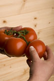hand som fyra rymmer organiska tomater Arkivfoto