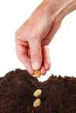 hand som planterar frö Royaltyfria Foton