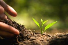 hand som planterar i trädgård brown räknad dagjord som miljölövverk går den gående gröna treen för text för slogan för ordstäv fö arkivfoto