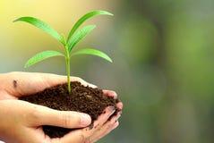 Hand som rymmer den gröna växten i jord över suddighetsabstrakt begreppnaturen, Royaltyfri Foto