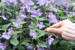 Hand som rymmer den härliga blomman royaltyfria bilder