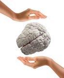 Hand som rymmer den mänskliga hjärnan på vit bakgrund Fotografering för Bildbyråer